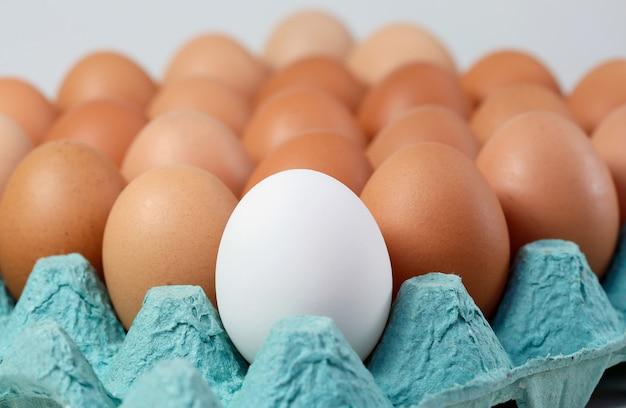 Seul œuf blanc parmi les œufs bruns