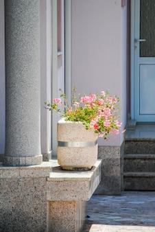 Seul pot de fleurs dans la cour de budva. monténégro.