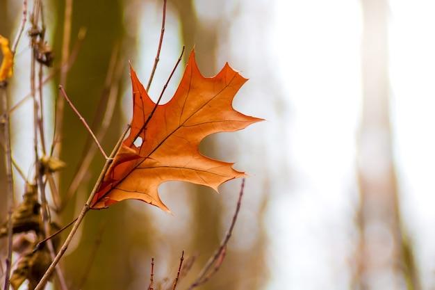Une seule feuille sèche orange sur une branche d'arbre à l'automne