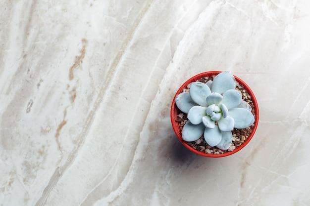 Une seule plante succulente en pot