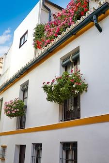 Séville juderia barrio andalousie séville espagne