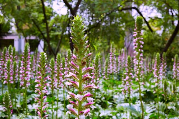 Seville maria luisa park gardens espagne