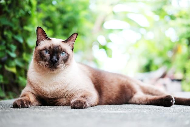 Siames chat assis et se détendre dans le jardin naturel