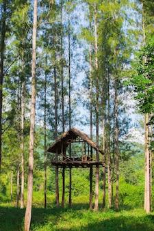 Siège haut dans la forêt en thaïlande
