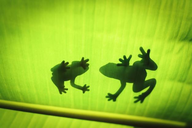 La silhouette de l'animal sur la feuille.
