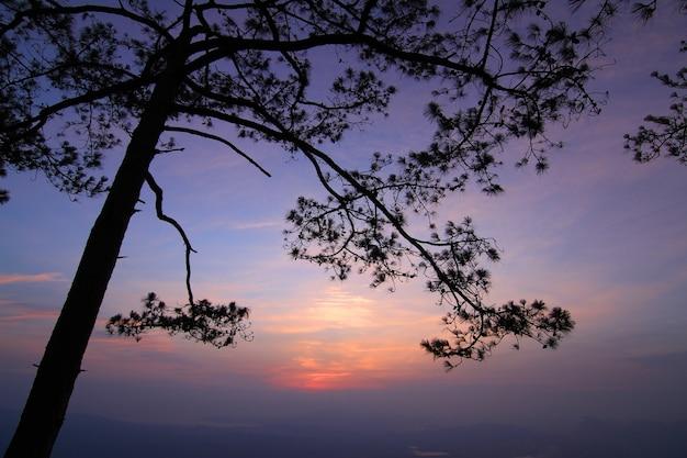 Silhouette d'un arbre au coucher du soleil