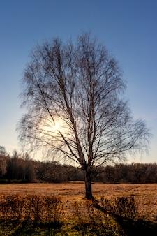Silhouette d'un arbre d'automne debout solitaire dans les rayons du soleil couchant