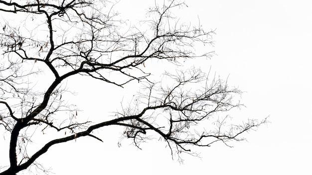 Silhouette d'un arbre aux branches nues isolé