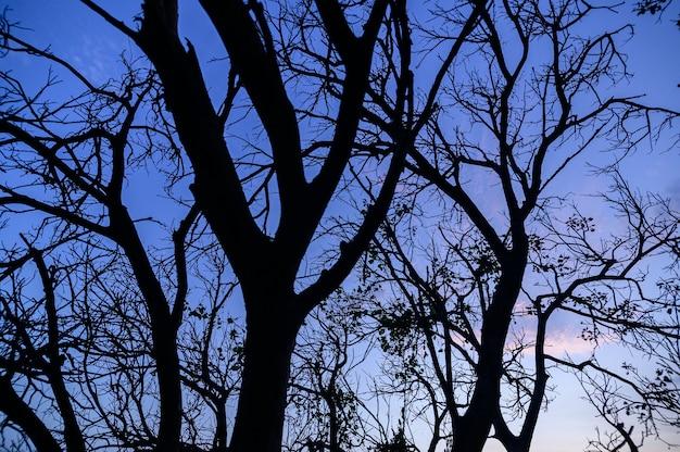 Silhouette d'arbre et ciel et nuages dans la soirée