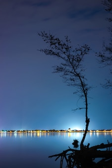 Silhouette d'arbre à la lumière de la ville