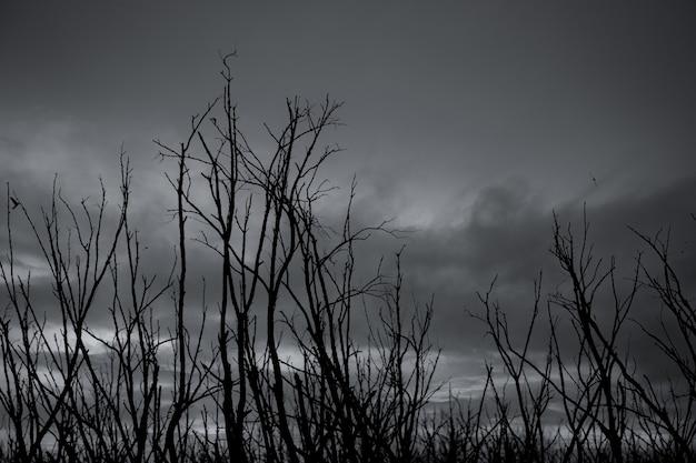 Silhouette arbre mort sur ciel dramatique sombre et nuages gris.