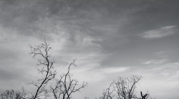 Silhouette d'arbre mort sur fond de ciel dramatique sombre et de nuages blancs pour une mort paisible. désespoir et concept sans espoir. triste de la nature. fond de mort et d'émotion triste. modèle unique de branche morte.