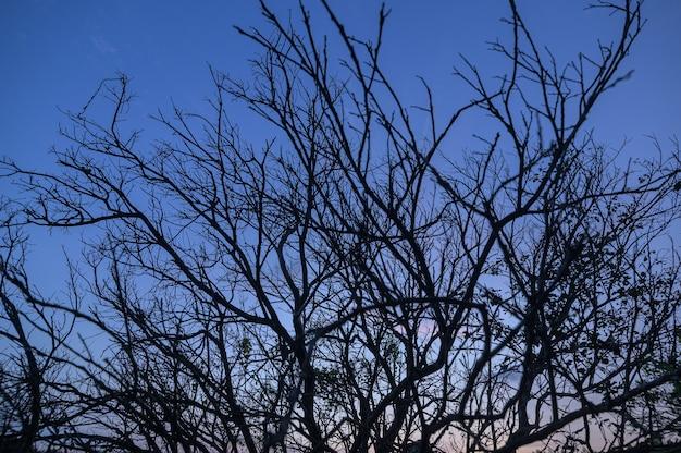 Silhouette d'arbre sec contre le ciel le soir