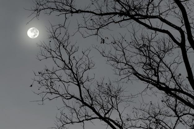 Silhouette d'arbre sec dans la nuit avec la pleine lune dans le ciel noir.