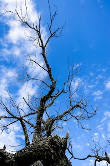 La silhouette d'un arbre séché nu sur le fond de ciel bleu.