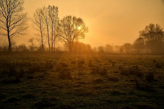 Silhouette d'arbres avec la lumière du soleil qui brille sur le terrain
