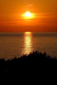 Silhouette d'arbres avec mer reflétant le soleil et un ciel orange