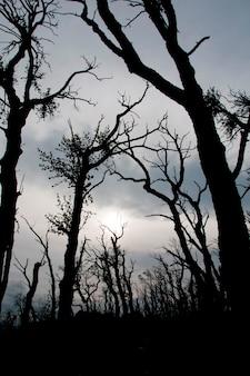 Silhouetté des arbres par une journée nuageuse