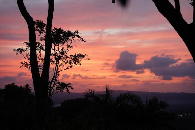 Silhouette d'arbres et de plantes au coucher du soleil surplombant la république dominicaine