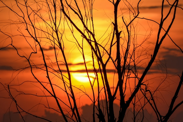 Silhouette d'une branche d'arbre avec coucher de soleil, fond d'halloween.