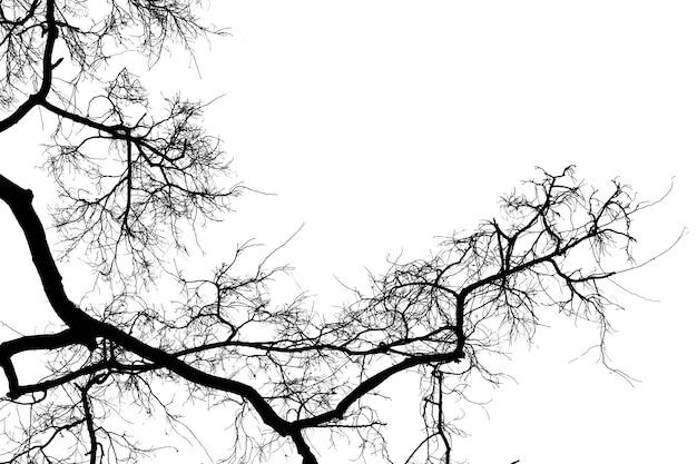 Silhouette de branches mortes, arbre sec