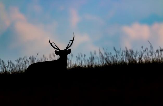 Silhouette de cerf aboyant dans l'herbe