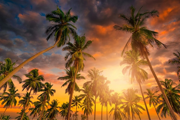 Silhouette de cocotiers sur la plage au coucher du soleil. ton vintage.