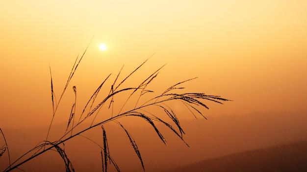 Silhouette coucher de soleil ciel