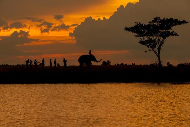 Silhouette de défilé d'éléphants et de la culture