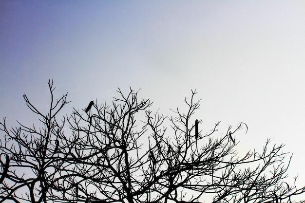 Silhouette dry branches silhouette sur ciel sombre