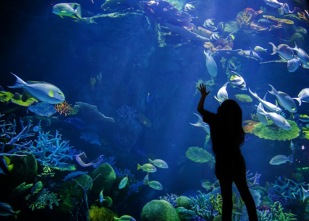 Silhouette enfant lève les yeux sur l'aquarium sous-marin