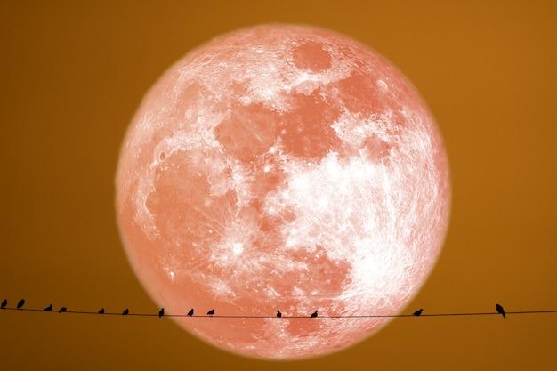 Silhouette de foin lune arrière silhouette oiseaux sur la ligne électrique