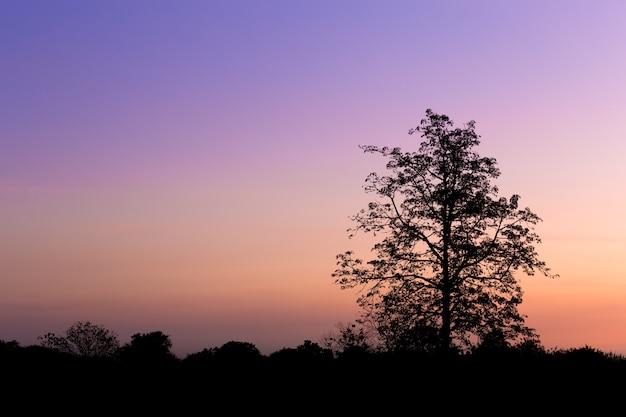 Silhouette de grand arbre au coucher du soleil