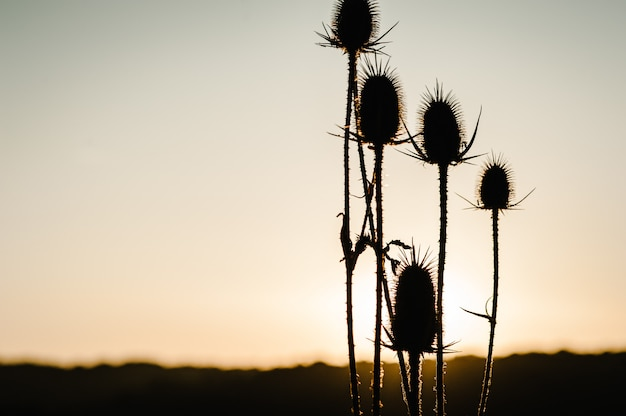 Silhouette herbe jaune sur le terrain au soleil au coucher du soleil. monde, concept de jour de l'environnement pays. superbe lever de soleil de prairie avec de la lumière. automne, printemps, été.