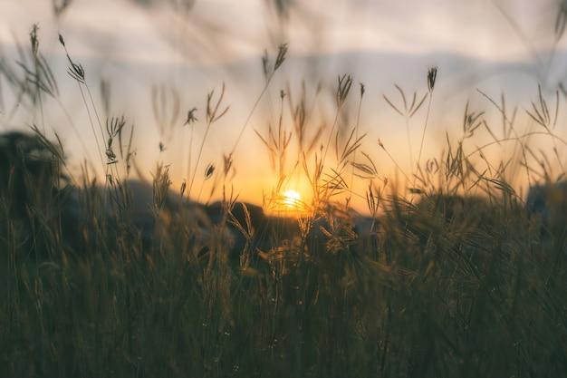 Silhouette d'herbes des prairies