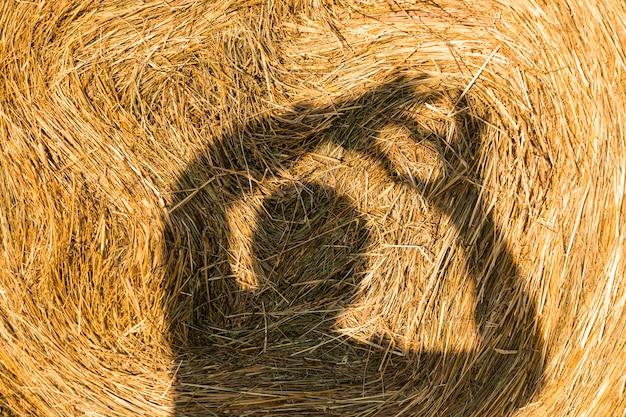 Silhouette humaine sur rouleau de hays