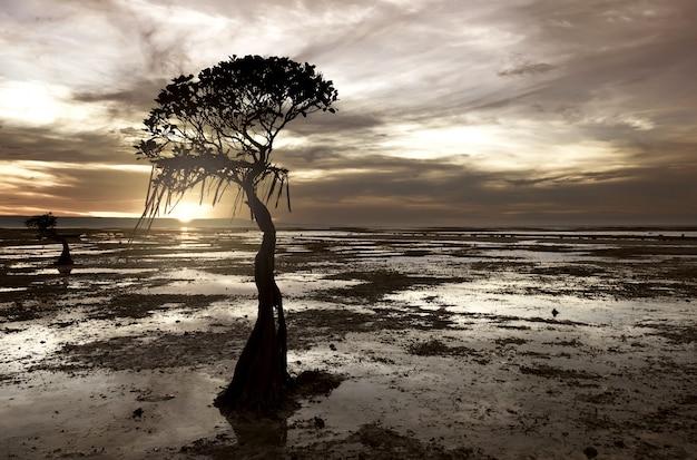 Silhouette de mangrove sur la plage de walakiri