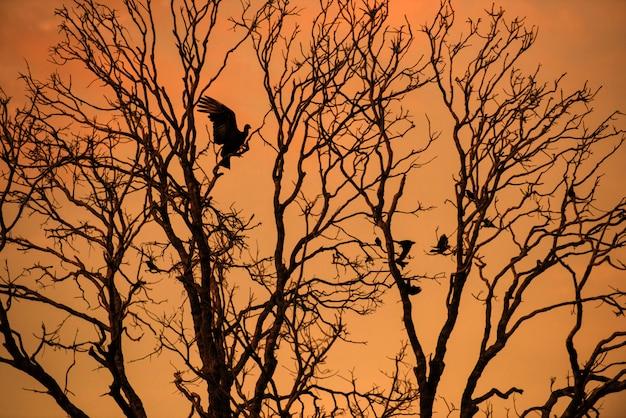 Silhouette d'un oiseau atterrissant sur une branche d'arbre sans feuilles pendant le magnifique coucher de soleil au parc national de jalapao, dans l'état de tocantins, brésil