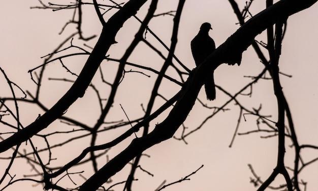 Silhouette d'oiseau et brindille