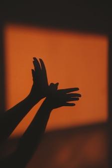 Silhouette d'ombre abstraite d'oiseau de rayon de soleil sur le mur