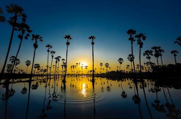 Silhouette de palmier et de réflexion.