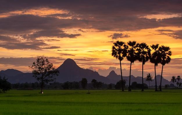 Silhouette de palmier à sucre avec éclairage du soleil