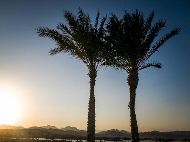 Silhouette de palmiers poussant sur la plage de la mer contre beau coucher de soleil sur l'océan sur backgorund