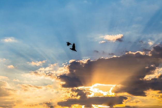 Silhouette photo.bird volant avec coucher de soleil