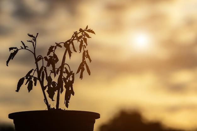Silhouette de plante morte dans un pot en plastique sur une table en bois avec espace de copie