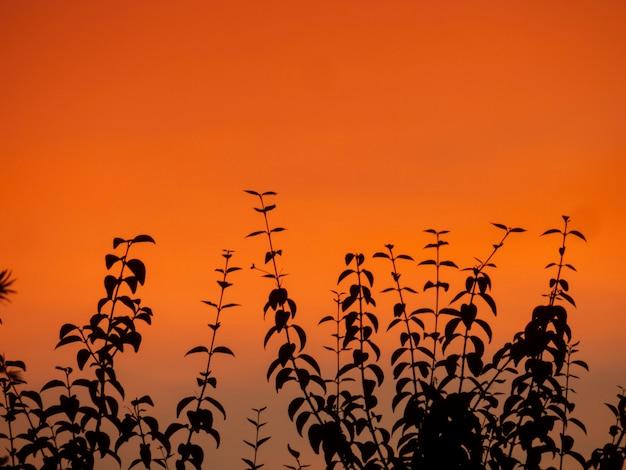 Silhouette de plantes au coucher du soleil