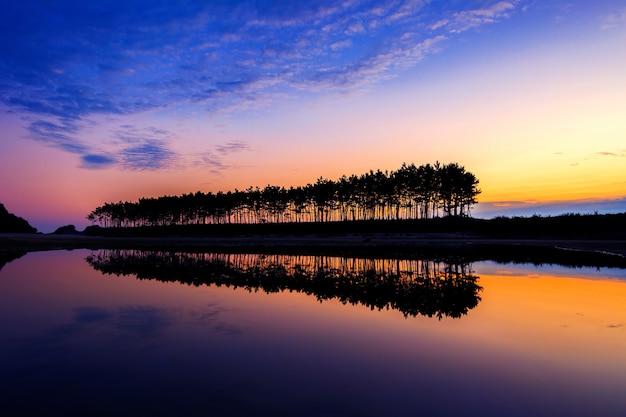 Silhouette et réflexions d'arbre en rangée au coucher du soleil