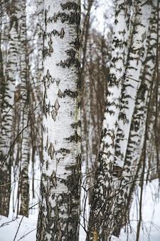 Silhouettes d'un arbre noir sans feuilles sur fond blanc, photos négatives de branches d'arbres