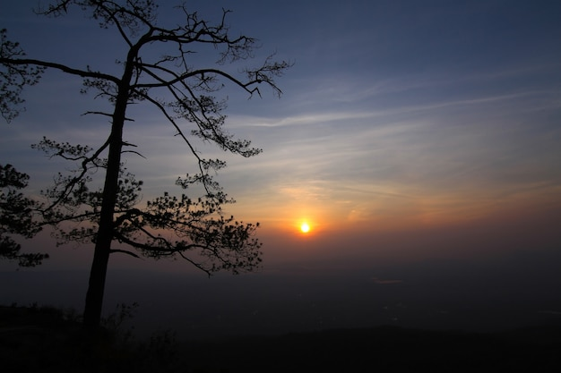 Silhouettes d'arbres au coucher du soleil