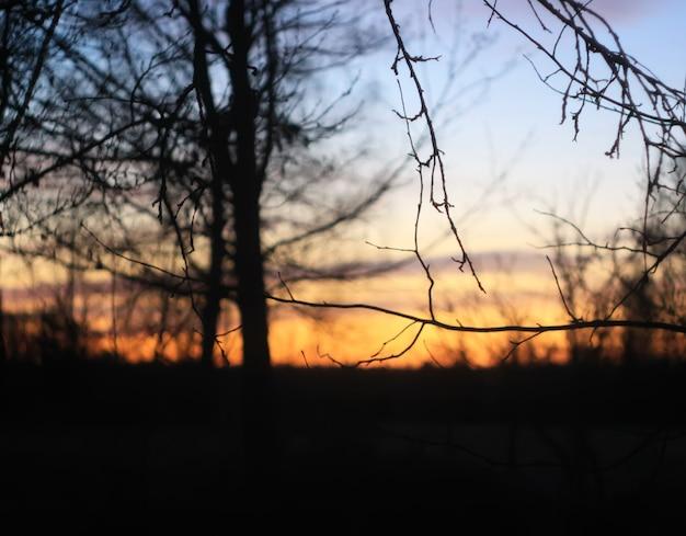Silhouettes de branches d'un arbre sur fond de coucher de soleil de printemps.